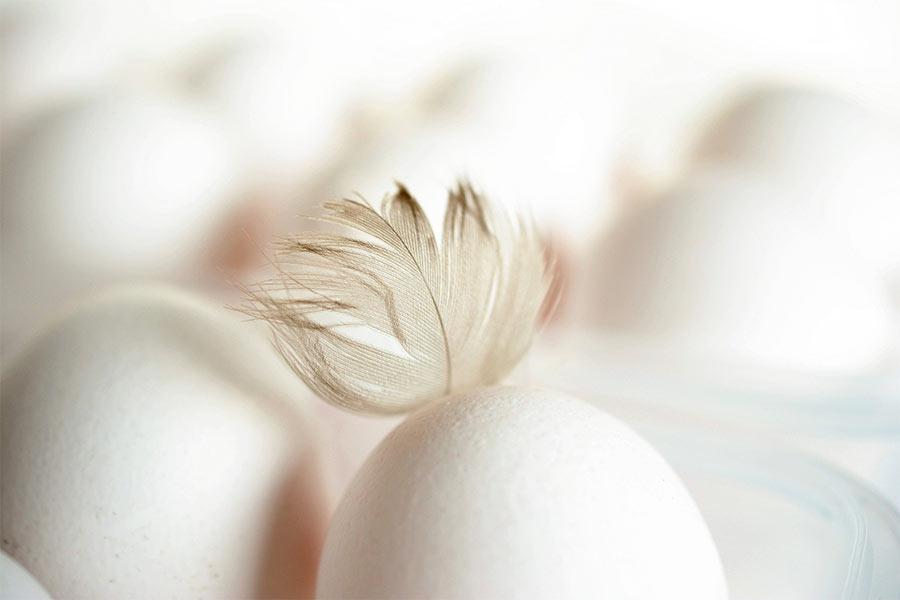 Eier von Geflügelhof Schmidt